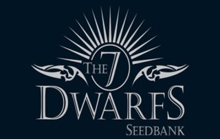 7 Dwarfs Seeds