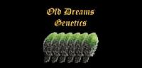 Old Dreams Genetics