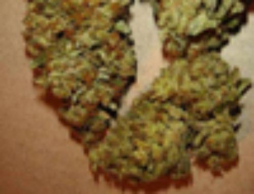 Aiea Marijuana Seeds — Strain Reviews — Delta 9 Labs Seeds