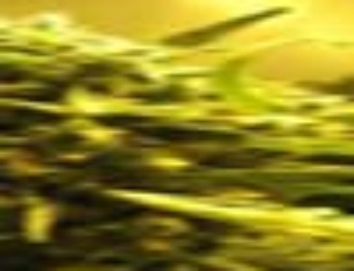 Cinnamon Marijuana Seeds – Strain Reviews – Female Seeds