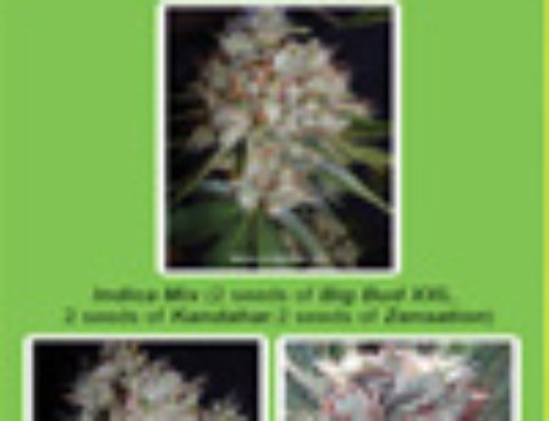 Indica Mix Marijuana Seeds — Strain Reviews — Ministry of Cannabis