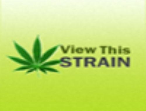 Apollo 11 G4 Marijuana Seeds – Strain Reviews – Reservoir Seeds