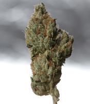 Cold Creek Kush Marijuana Seeds