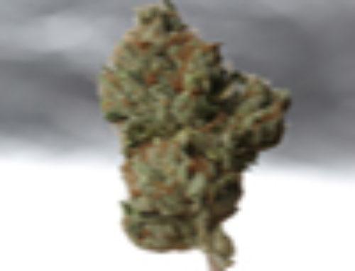 Cold Creek Kush Marijuana Seeds – Strain Reviews – TH Seeds