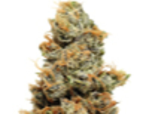 Pineapple Chunk Marijuana Seeds — Strain Reviews — Barney's Farm Seeds
