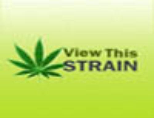 Gord Cornfield Marijuana Seeds – Strain Reviews – Asturjaya