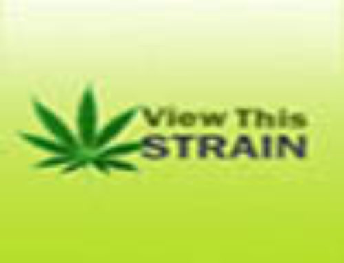 Mystery Mix Marijuana Seeds – Strain Reviews – Bonguru Seeds