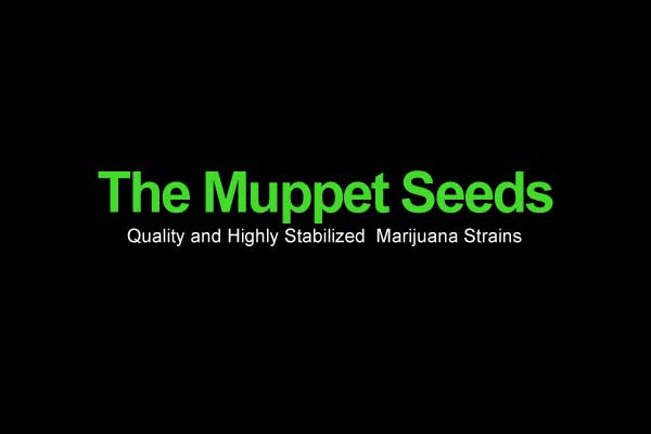 The-Muppet-Seeds