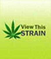 White Lightening Marijuana Seeds