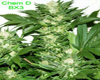 Posse A-Dawg Marijuana Seeds
