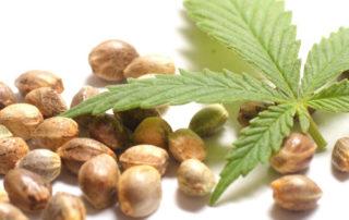 top rated marijuana seed banks