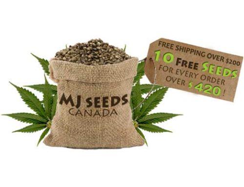 MJ Seeds Canada