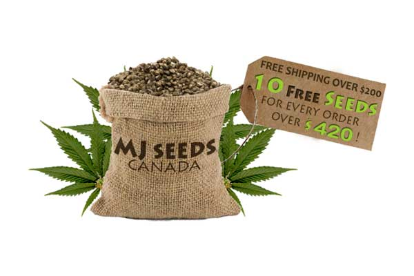 mj marijuana seeds