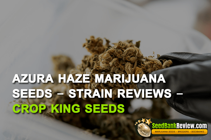 Azura Haze Marijuana Seeds