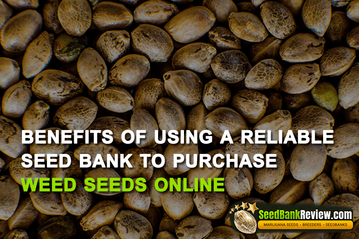 purchase weed seeds online