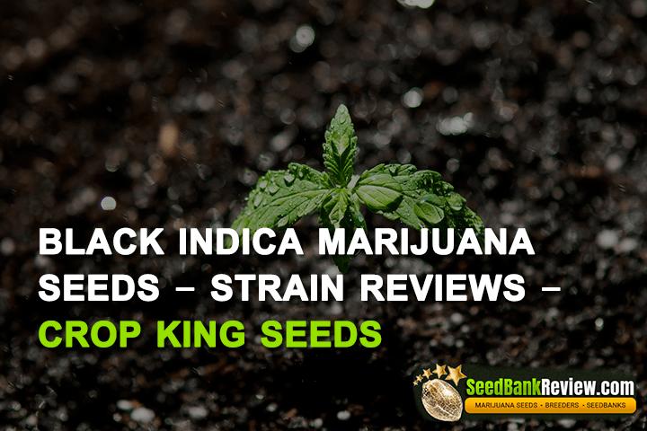black indica marijuana seeds