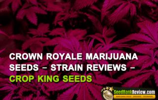 crown royale strains
