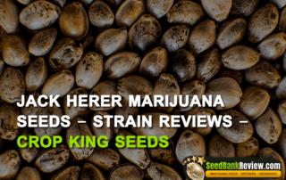 jack herer marijuana seeds