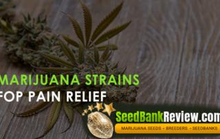 marijuana strains for pain