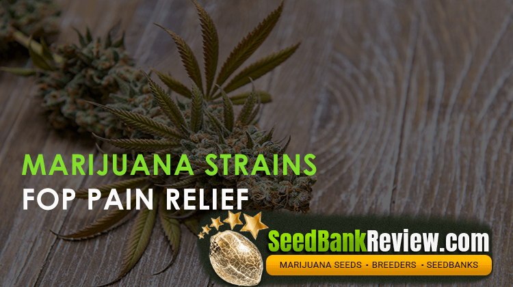 marijuana strains for pain