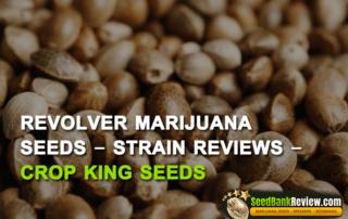 revolver-marijuana-seeds