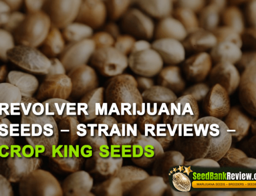 Revolver  Marijuana Seeds – Strain Reviews – Crop King Seeds