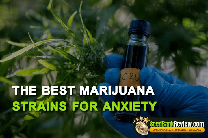 marijuana strains for anxiety
