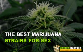 best marijuana strains for sex