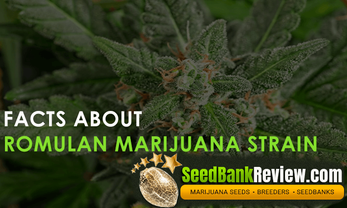 romulan marijuana strain